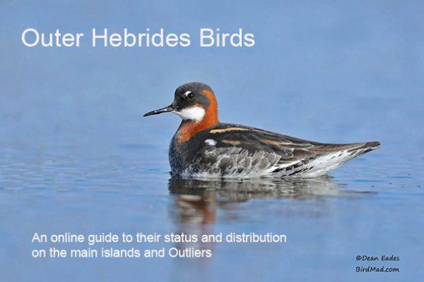Outer Hebrides Birds